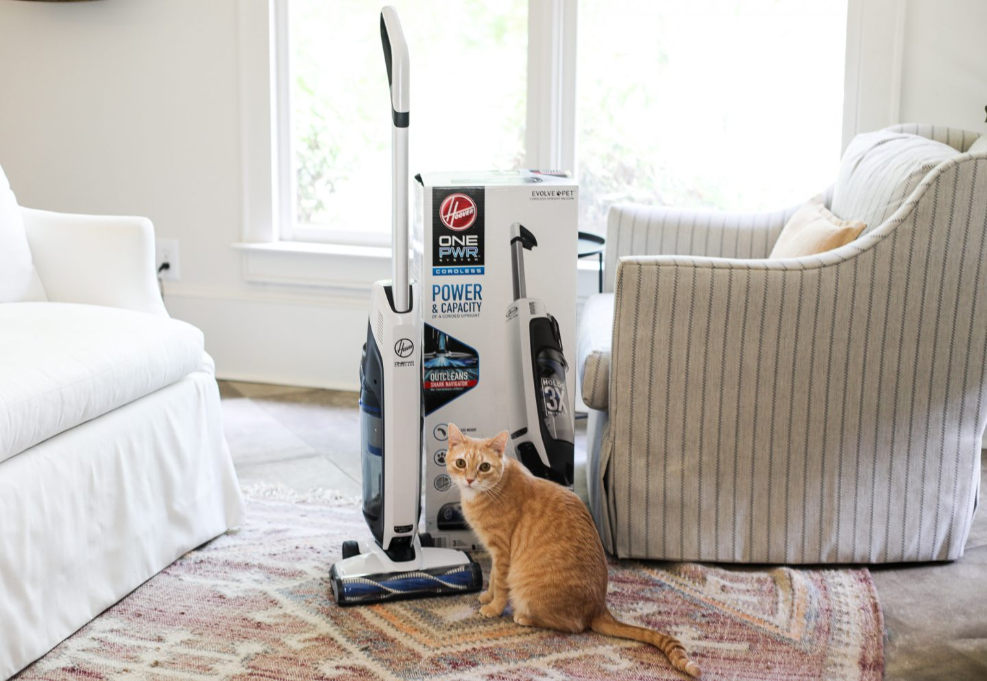 5 Must Have Cat Products
