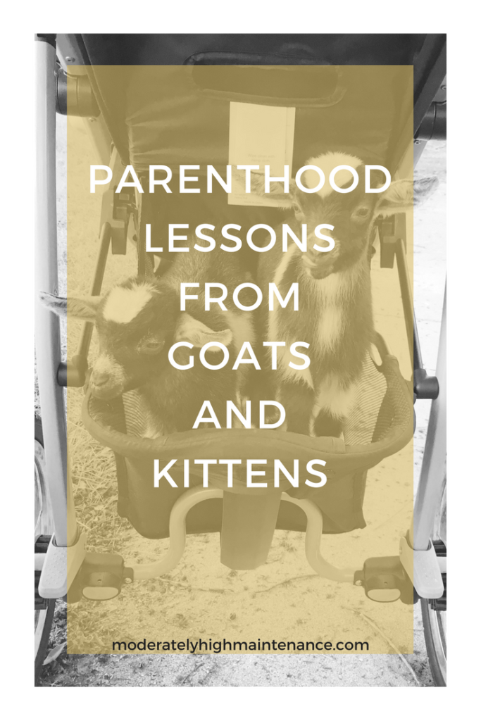 We have here are the parenthood lessons we have learned in our three weeks of being responsible for fifteen mouthes other than our own!