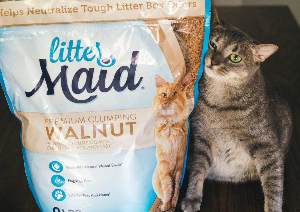 The Scoop On Natural Kitty Litter Moderately High