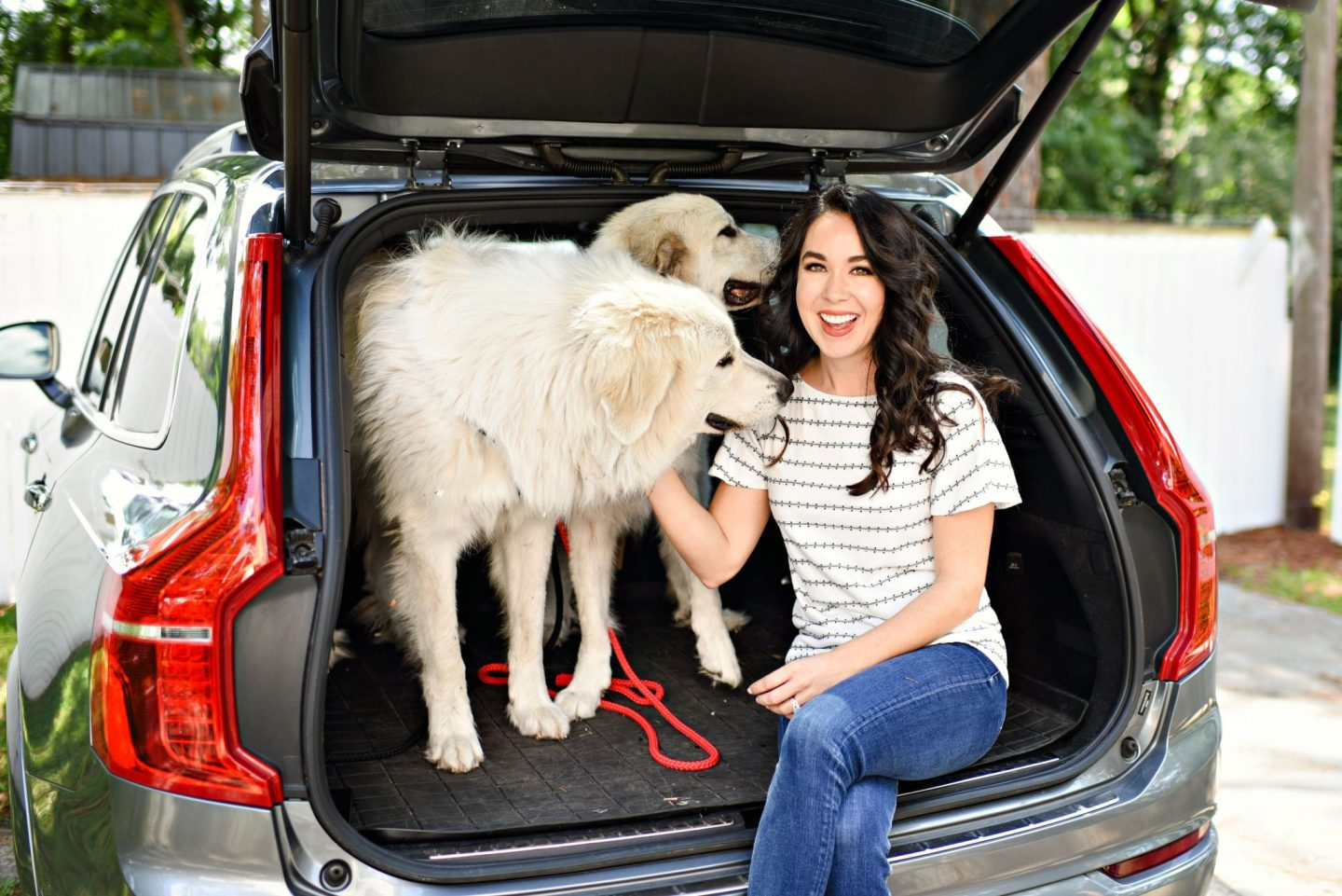 3 Things Dog Lovers Should Look for in a Car