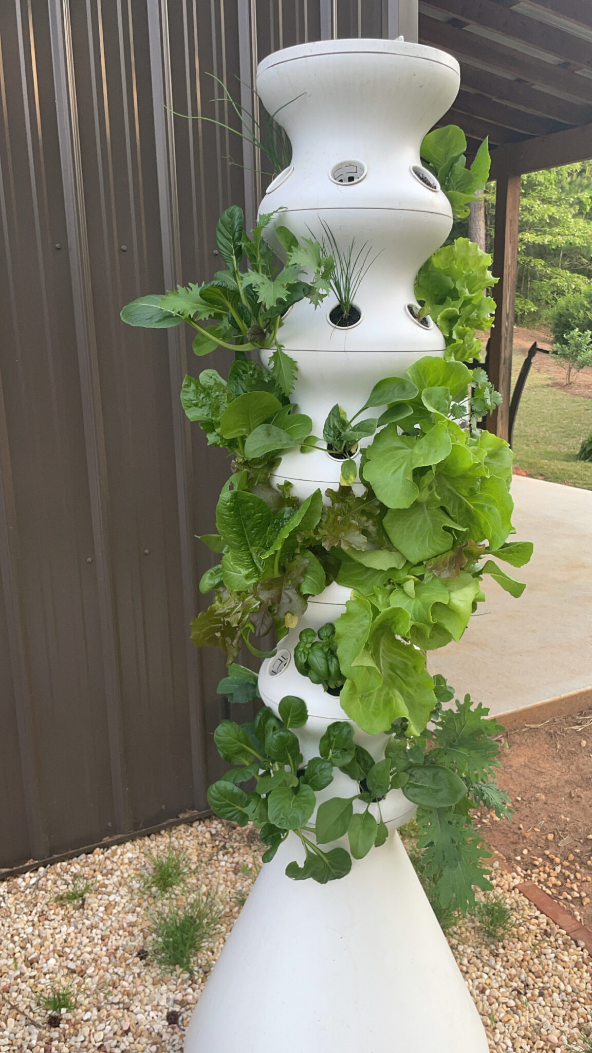 easy hydroponic garden, featured by top Atlanta lifestyle blogger, Moderately High Maintenance | Hydroponic Garden by popular Atlanta lifestyle blog, Moderately High Maintenance: image of leafy greens growing out of The Farmstand hydroponic garden.