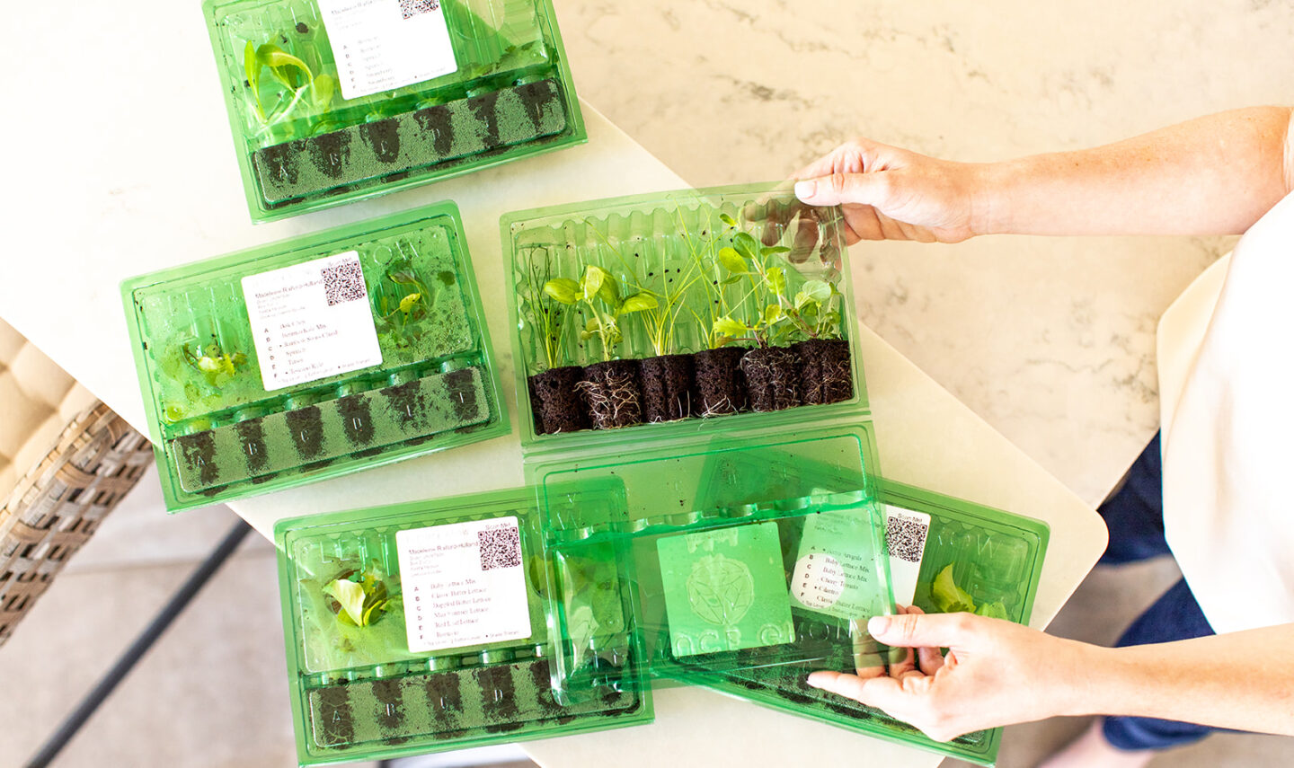 easy hydroponic garden, featured by top Atlanta lifestyle blogger, Moderately High Maintenance | Hydroponic Garden by popular Atlanta lifestyle blog, Moderately High Maintenance: image of seedlings in green plastic containers.